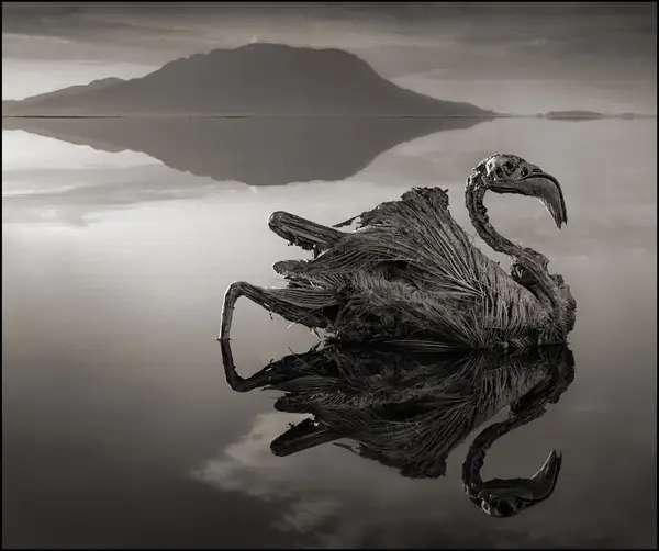 Flamant rose momifié du lac Natron. © Nick Brandt