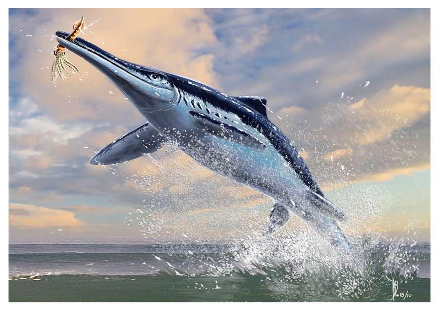 Vue d'artiste (A. Bénéteau) d'un ichthyosaure (Platypterygius). Les ichthyosaures présentaient les adaptions aquatiques les plus évidentes avec une anatomie rappelant celle d'un dauphin avec une nageoire caudale placée comme chez les poissons (orientée verticalement donc, et non horizontalement comme chez les cétacés). © PEPS (CNRS, université de Lyon 1), INSU