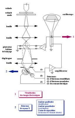 Microscope électronique : schéma de fonctionnement
