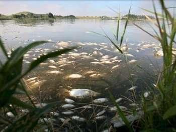 Le nombre de poissons retrouvés morts dans le fleuve Amazone est sans précédent. De futures études devraient permettre d'en connaître la cause exacte. Crédits DR