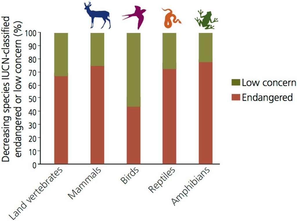 Le pourcentage d'espèces en déclin classées par l'UICN comme « en voie de disparition », endangered, (y compris « en danger critique d'extinction », « en voie de disparition », « vulnérable » et « proche menacé ») ou de « faibles préoccupations » (low concern) chez les vertébrés terrestres. Ce chiffre souligne que même des espèces qui n'ont pas encore été classées comme en voie d'extinction (environ 30 % dans le cas de tous les vertébrés) sont en déclin. Cette situation est plus critique encore pour les oiseaux, dont près de 55 % des espèces en baisse sont toujours classées dans la catégorie « peu préoccupantes ». © Pnas