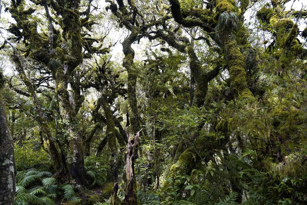 Le mont Taranaki et sa ceinture végétale unique