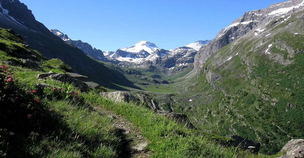 L'edelweiss est une fleur symbolique. Ici, la vallée supérieure du Ponthurin (le lac de la Plagne, à 2.144 mètres, se trouve derrière la cascade au fond de la vallée). À l'arrière-plan, le sommet La Grande Motte (commune de Peisey-Nancroix, en Savoie, en Auvergne-Rhône-Alpes). © Thor19, CC by-sa 4.0