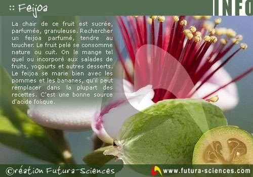 Fruit du Feijoa