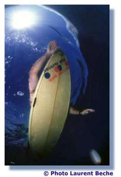 Cette photo reproduit la vision du requin... © L. Beche