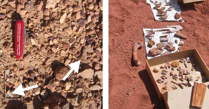 Il existe probablement un biais lors de la collecte des fossiles dans un but commercial. À gauche, fossiles en place sur le terrain (les flèches montrent une dent de crocodile et une dent rostrale d'Onchopristis) ; à droite, « étal » d'un vendeur de fossiles. © L. Cavin