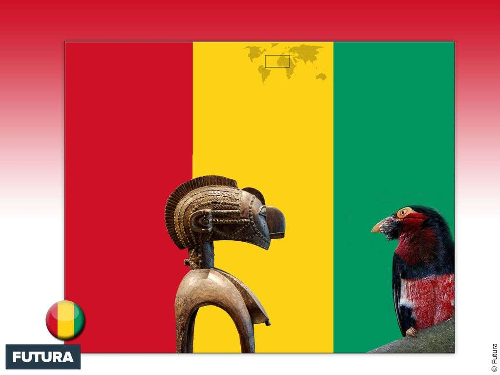 Drapeau : Guinée