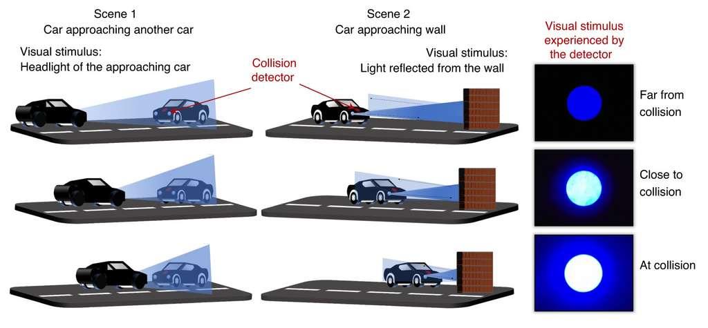 Plus l'objet se rapproche, plus le stimulus lumineux augmente, ce qui induit une différence de potentiel électrique chez le nanodétecteur. © Darsith Jayachandran et al, Nature Electronics, 2020