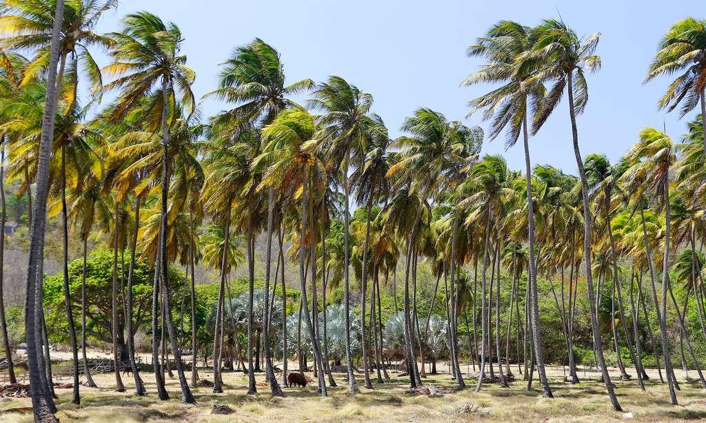 Wallilabou bay, un décor pour les pirates
