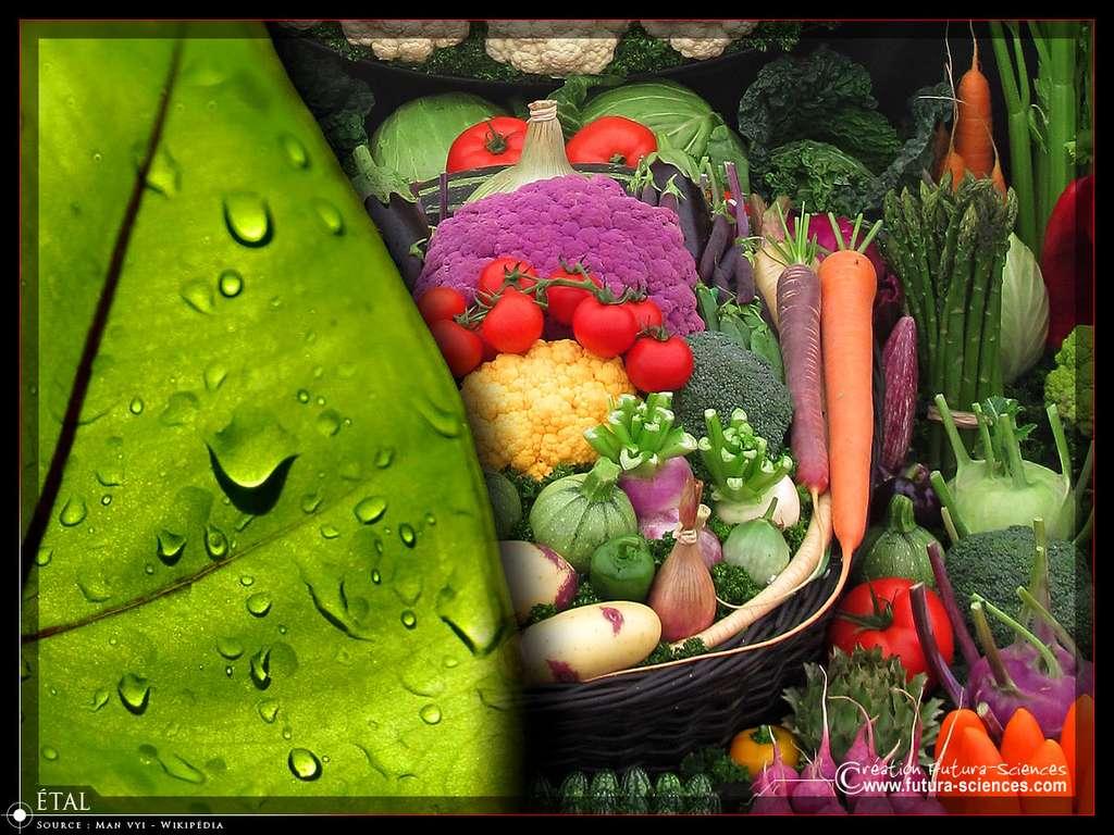 Légumes variés, tomate, chou, carotte