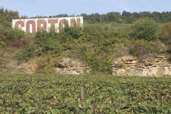 La colline de Corton, près de Beaune, abrite des grands crus rouges (à base de Pinot noir) et en haut de la pente, avant la lisière du bois, des grands crus blancs (à base de chardonnay). Un ressaut rocheux, sans doute autrefois une carrière, expose des strates de calcaire marneux. © C. Frankel