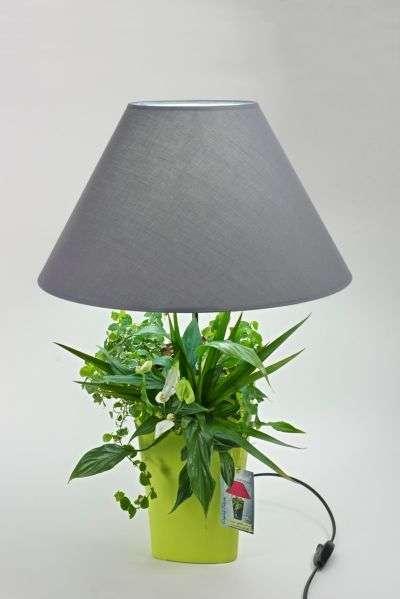 Lumipouss, un jardin sous votre lampe ! © Concours Lépine