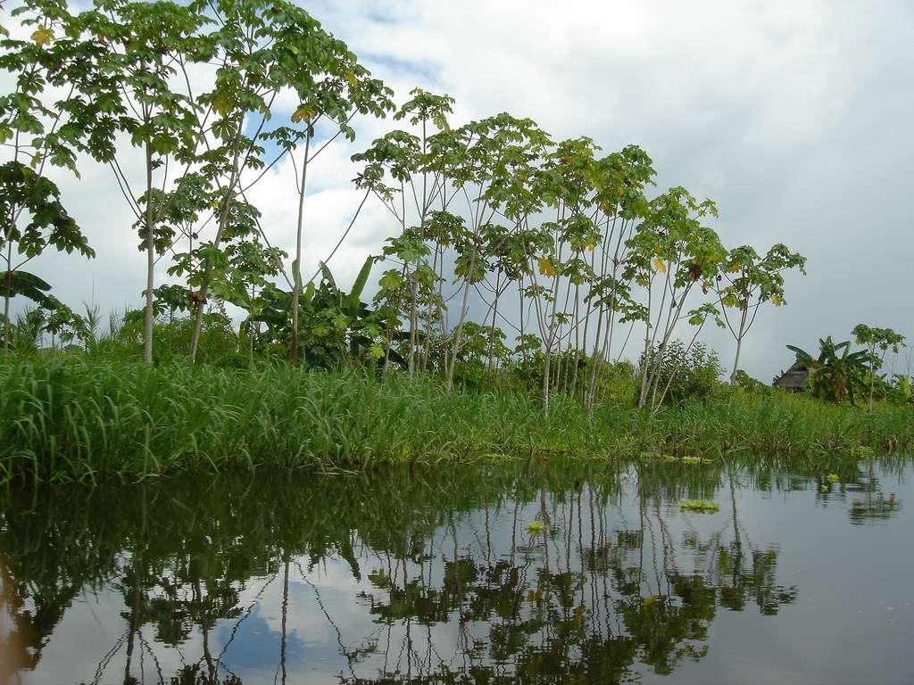 Les trois quarts des surfaces inondées sur les continents sont des zones humides. Le rôle de ces écosystèmes particulièrement productifs en matière organique dans le bilan de carbone des eaux continentales est méconnu. Le CO2 dissous dans les eaux d'un fleuve peut être transporté sur des dizaines ou des centaines de kilomètres avant d'être réémis vers l'atmosphère, lorsque la pression de gaz carbonique dans l'eau s'équilibre avec celle de l'air. © deltron 3032, Flickr, cc by nc sa 2.0