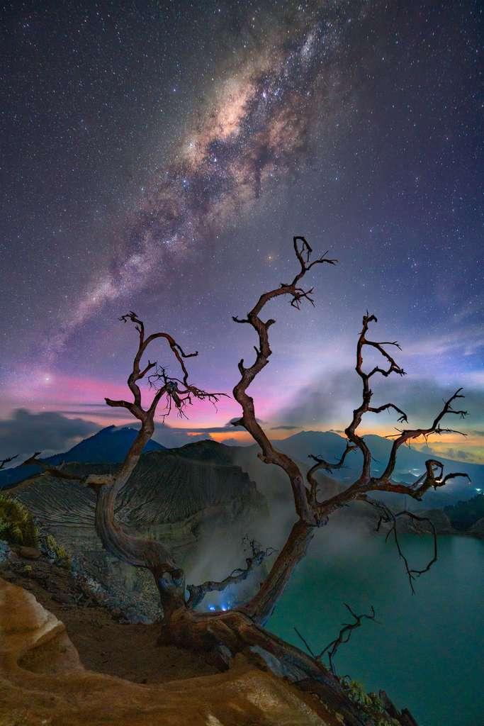 Around dead trees. © Gary Bhaztara