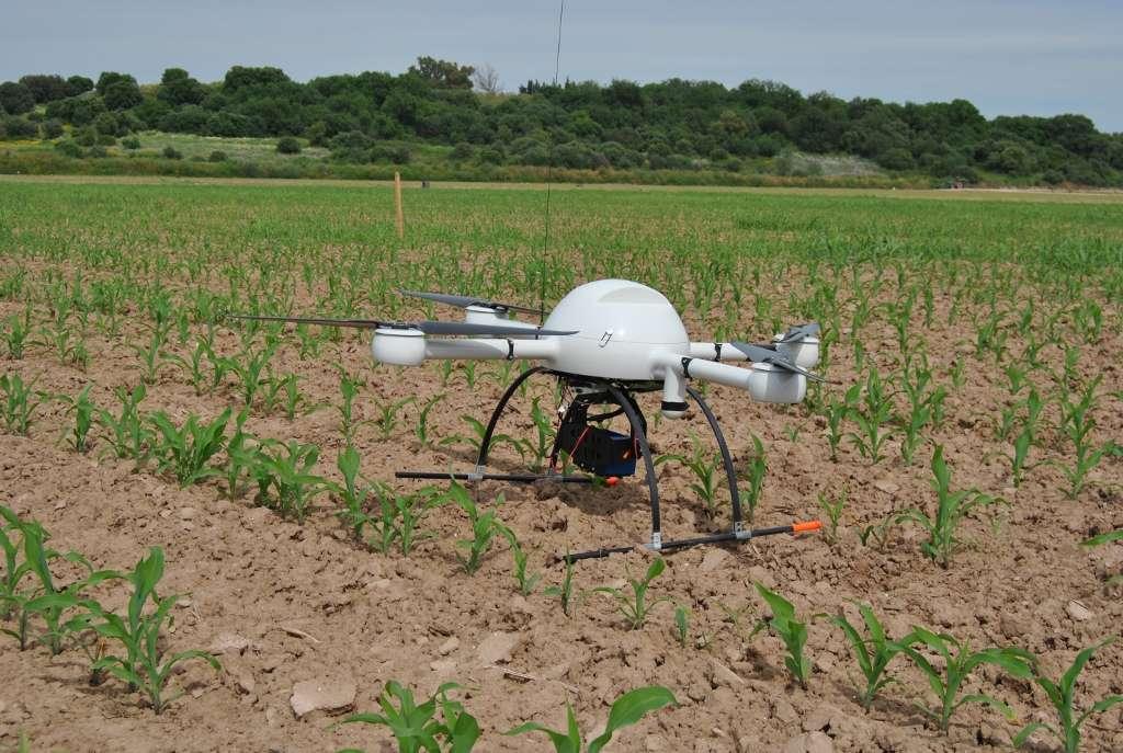 Doté d'une autonomie maximale de 88 minutes, ce drone, un quadricoptère MD4-1000, cartographie la répartition des mauvaises herbes dans un champ et peut emporter une charge utile de 1,25 kg. © CSIC