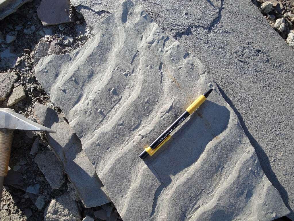 Rides de courant dans une série fossilisée. © SSP Division European Geosciences Union via imaggeo.egu.eu