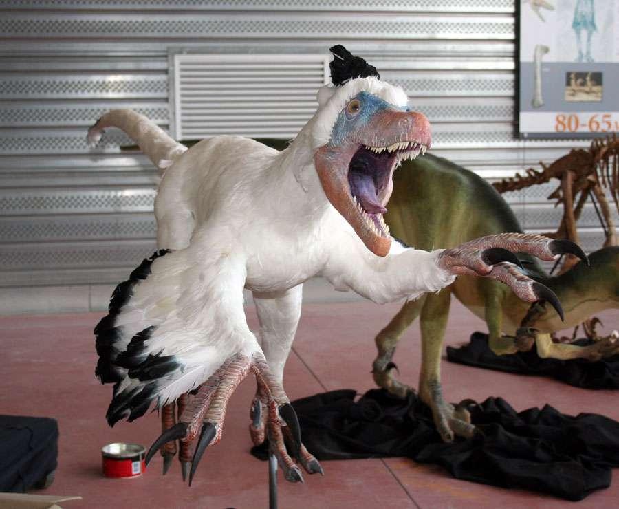 Variraptor au Musée d'Esparaza