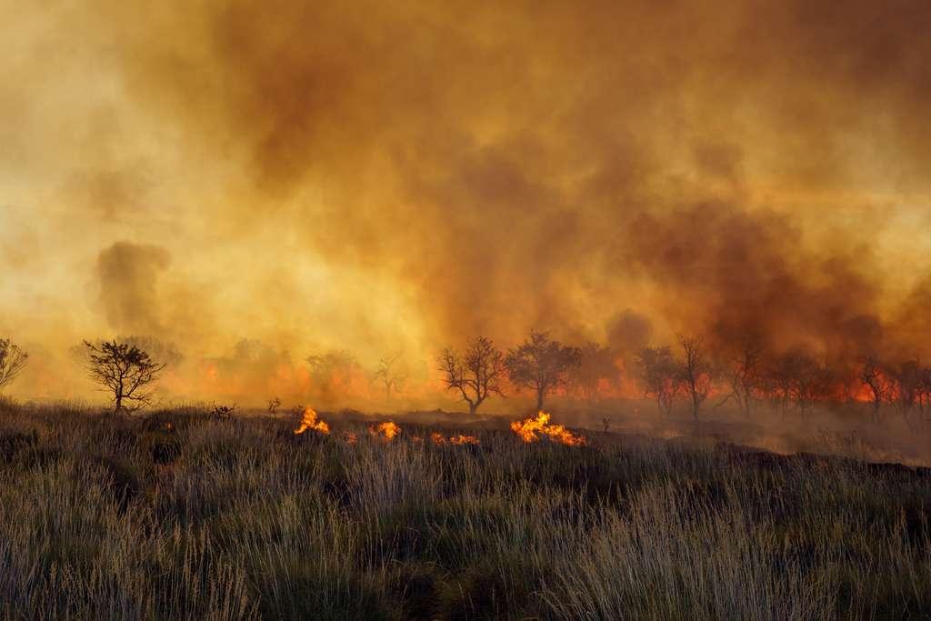 Feu de brousse (bushfires) en Australie. © beau, Adobe Stock