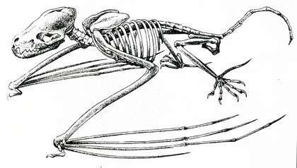 Squelette posé.