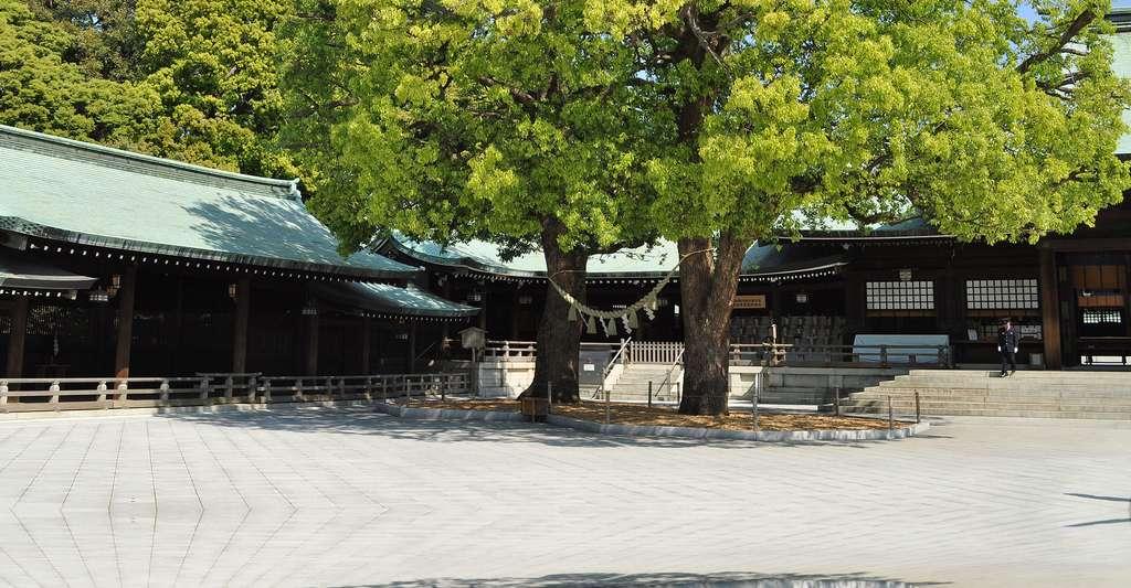 Sanctuaire shintoïste de Meiji Jingu. © Ocdp, CCO
