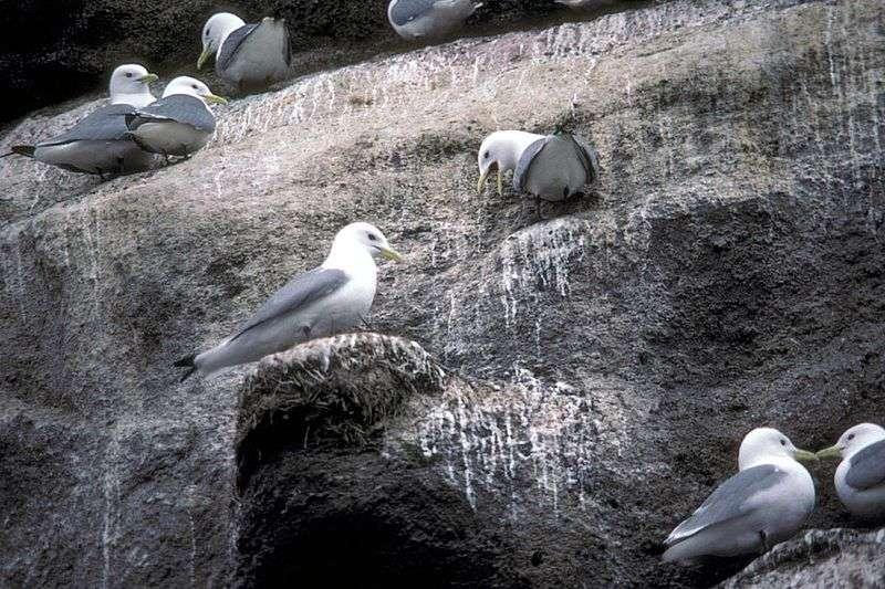 Zone de nidification type. © Dewhurst, Donna A., US F&WS, domaine public