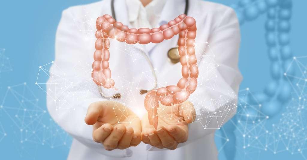 Quelles sont les causes du syndrome de l'intestin irritable ? Une étude menée en Belgique pense en avoir trouvé une. © natali_mis