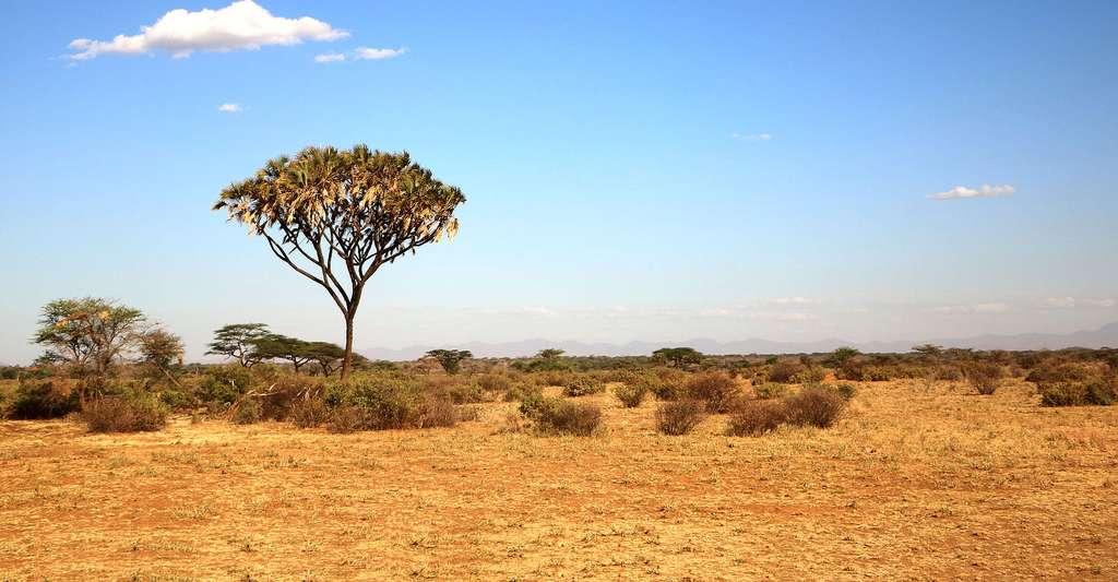 Vue de Madagascar. © Ronbd, Pixabay, DP