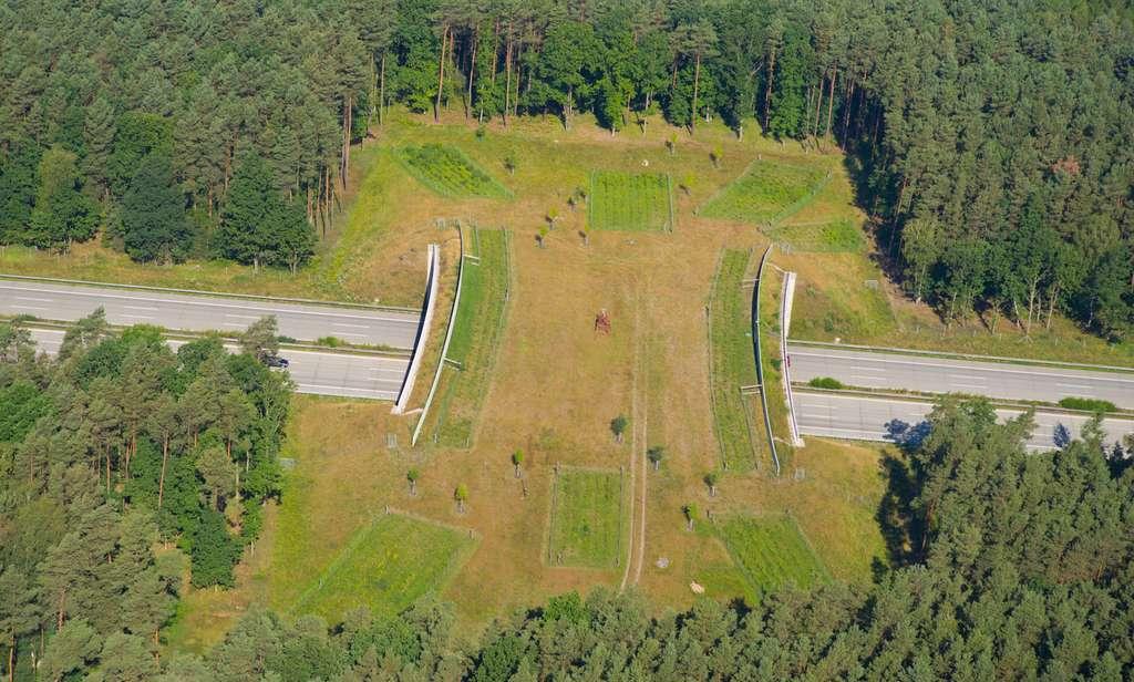 Cette photo d'un écoduc passant au-dessus d'une autoroute montre bien les aménagements réalisés pour encourager la traversée des animaux. © Mario Hagen, Fotolia