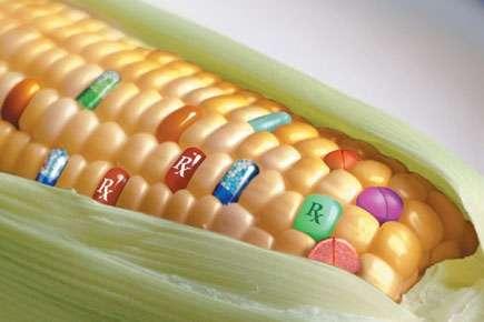 Qu'est-ce qu'un OGM ? © DR
