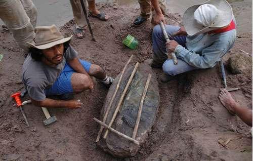 Expédition Fitzcarrald 2005, carapace fossile d'une tortue aquatique « Matamata » du Miocène. © IRD/ P. Baby Reproduction et utilisation interdites