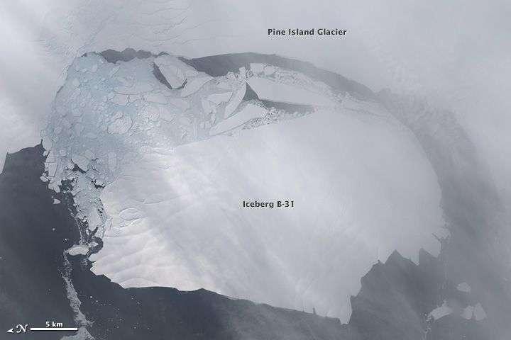 Un iceberg géant célèbre : B-31. Le 13 novembre 2013, ce bloc d'environ 700 km2, s'est détaché du glacier de Pine Island, en Antarctique, comme le montre cette image du satellite Landsat 8. Il commençait alors une dérive qui dure toujours. Avec lui voyage un écosystème riche absorbant énergiquement le dioxyde de carbone atmosphérique. © Nasa, Earth Observatory