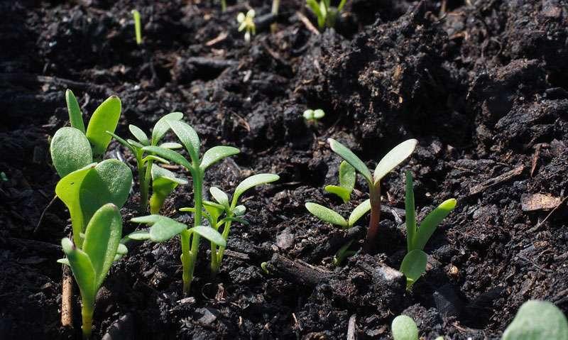 Il est possible d'améliorer la terre de son jardin. © Hans, Pixabay, DP