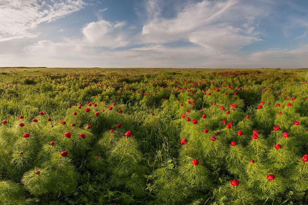 Des prairies, des savanes et des brousses, il y en a aussi dans les régions tempérées
