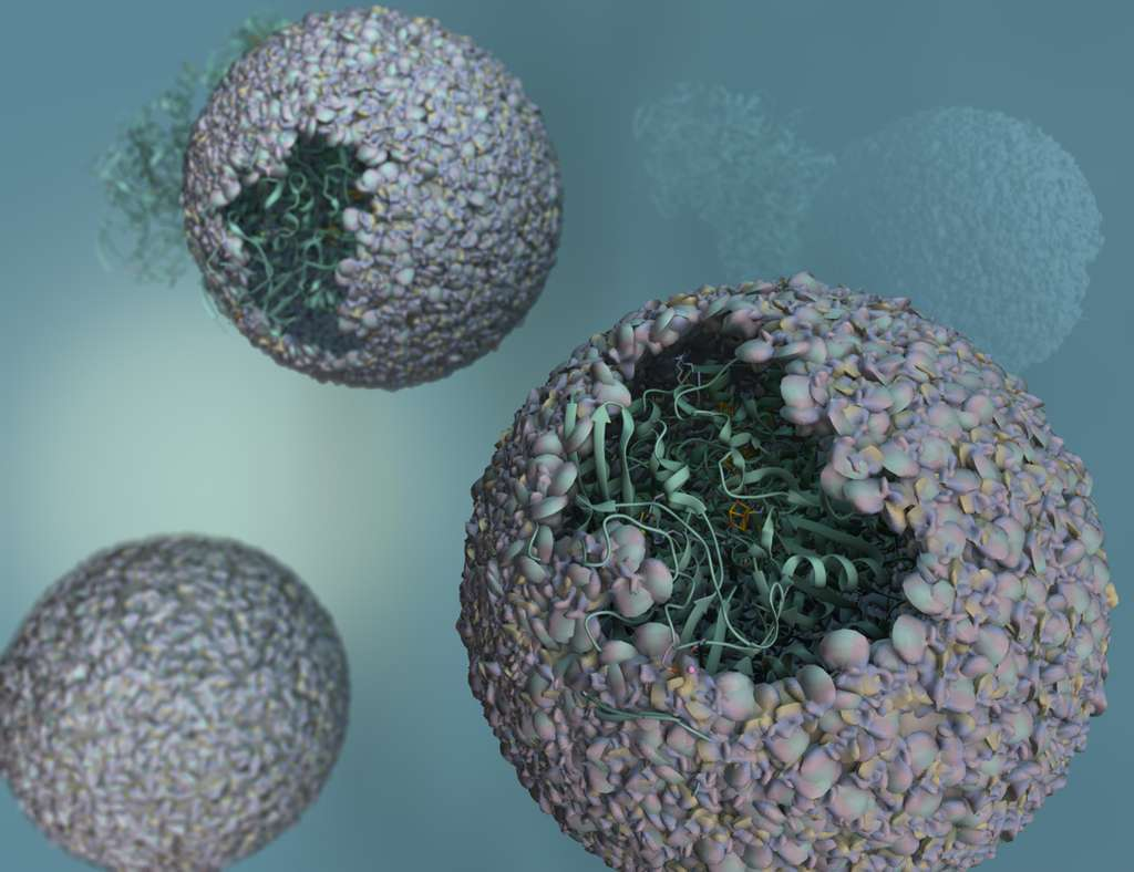 Sur cette vue d'artiste du biomatériau mis au point par des chimistes de l'université de l'Indiana (États-Unis), on distingue bien les enzymes prises au piège dans la capside d'un virus bactérien. © Trevor Douglas, University of Indiana