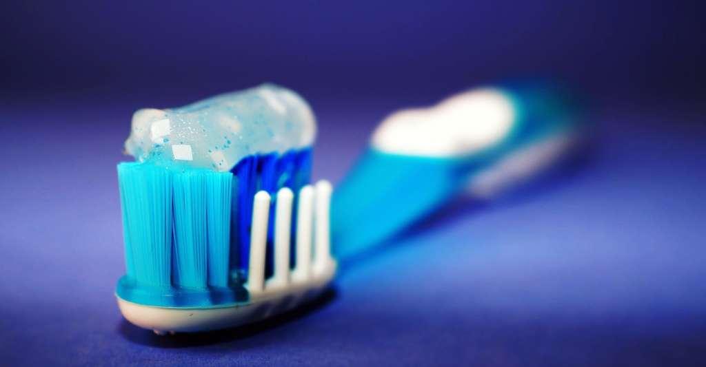 Les poils des brosses à dents ont constitué la première application industrielle du nylon. © StockSnap, Pixabay, CC0