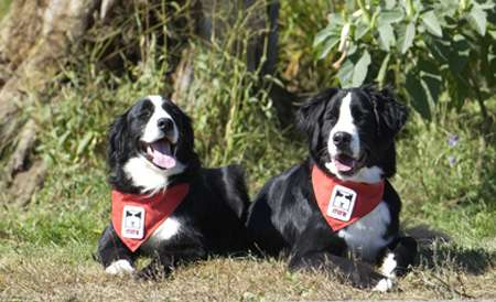 Les chiens de la fondation Mira. © Mira, tous droits réservés