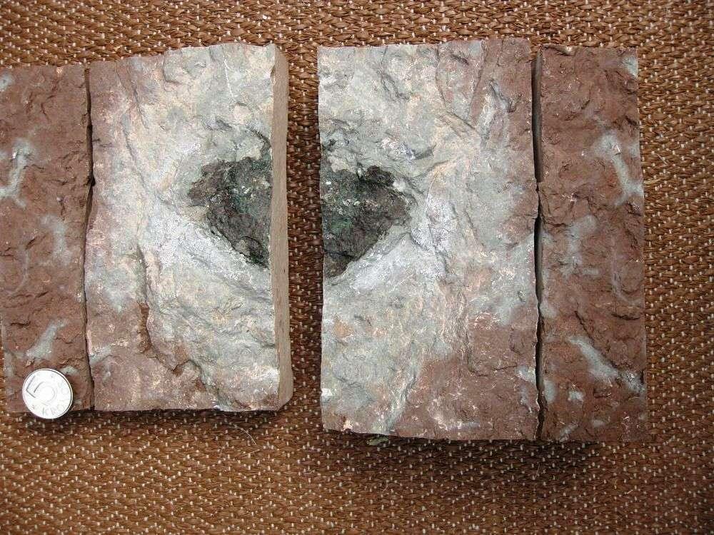 La météorite Österplana 065 (8 × 6,5 × 2 cm) est entourée d'un halo gris dans du calcaire autrement rouge, donc oxydé. On pense que l'oxygène a été consommé par l'altération de la météorite, alors au fond de la mer de l'Ordovicien où se déposaient les sédiments. La pièce de monnaie a un diamètre de 2,5 cm. © Birger Schmitz