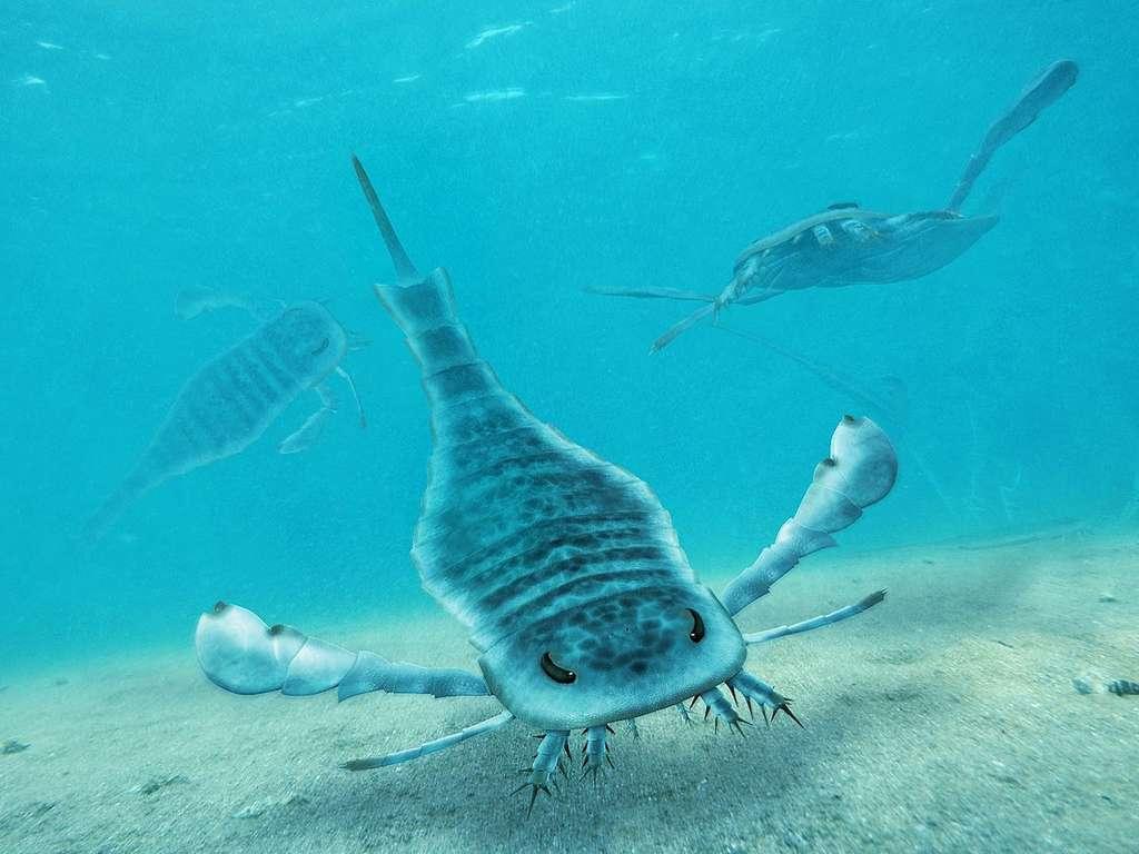 Les mers du Silurien sont devenues célèbres grâce à la découverte de fossiles de sortes de scorpions géants. On voit ici une reconstitution d'artiste de certains de ces arthropodes appelés euryptérides. © Wikipédia, cc by 2.0