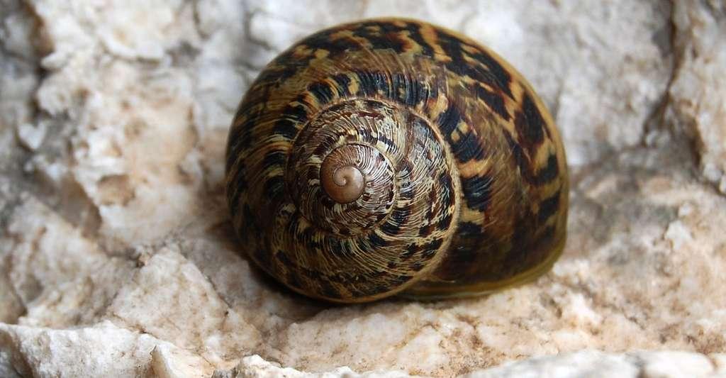 L'héliciculture, l'élevage des escargots, est très répandue en Touraine. © Tato grasso, Wikimedia commons, CC by-sa 3.0