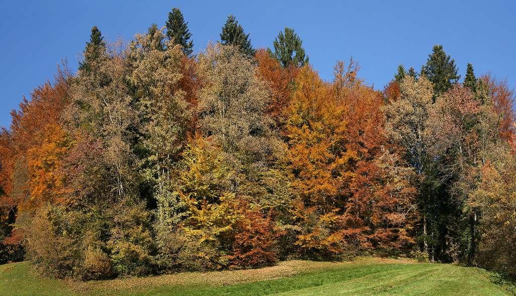 Les belles couleurs automnales des forêts tempérées d'Autriche