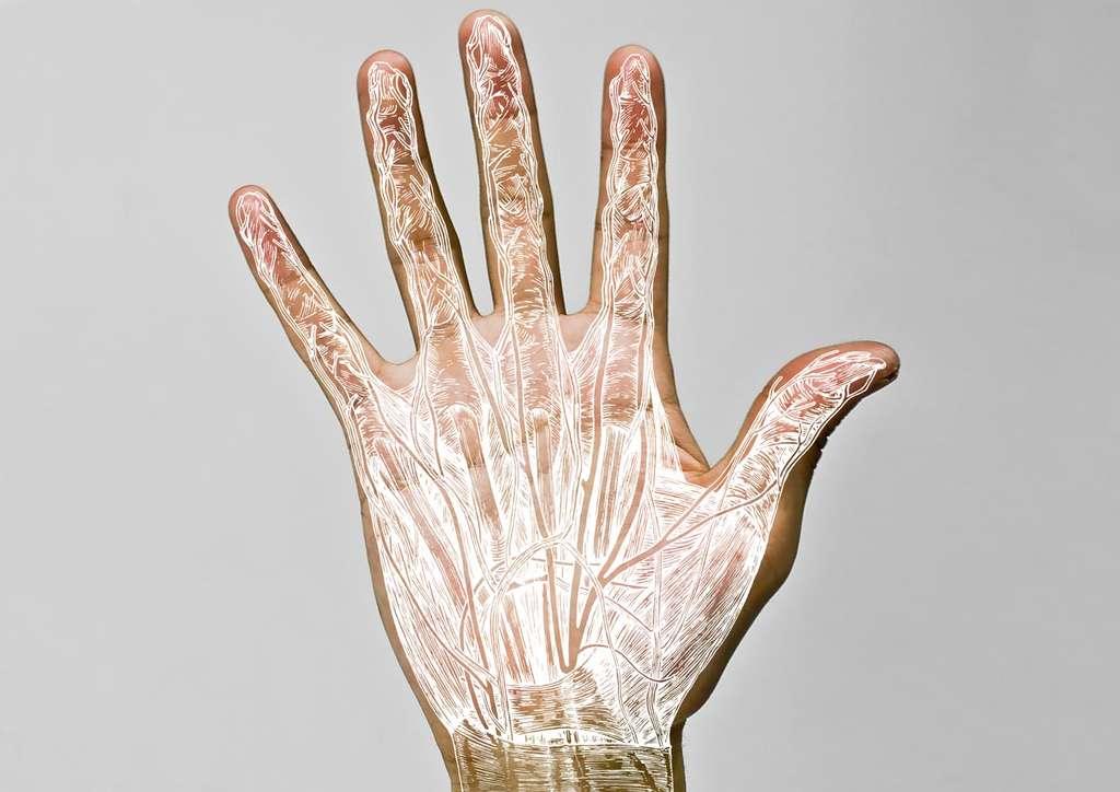 Anatomie de la main humaine