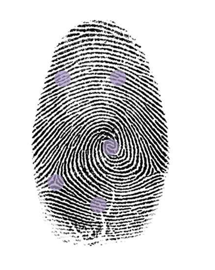 Sur cette empreinte, quelques minuties ont été soulignées par un cercle mauve. Selon la loi française, douze minuties sont nécessaires pour caractériser une empreinte digitale. © Hervé Lehning, tous droits réservés