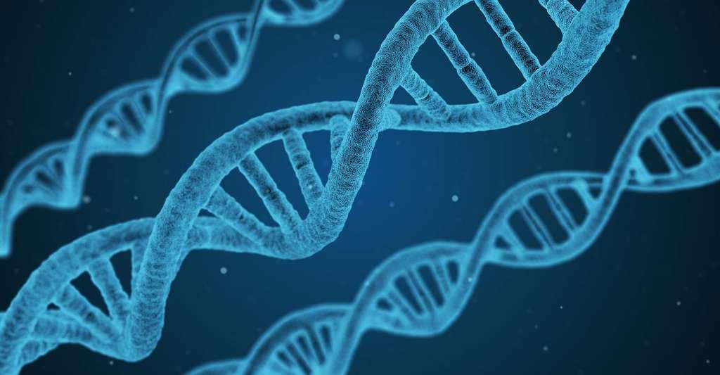 La recherche fondamentale, par exemple l'étude des gènes ou des protéines, est la première étape nécessaire vers l'obtention d'un médicament. © Qimono, DP