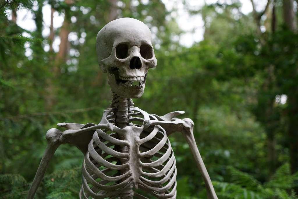 L'homme de Cioclovina est la trace du premier meurtre au sein du paléolithique supérieur en Europe. © Chris J Mitchell, Pexels
