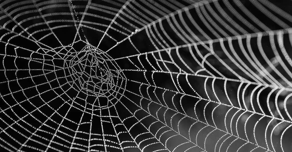 Dans ce modèle, la connaissance peut être représentée par une toile d'araignée. © bella67, Pixabay