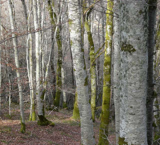 Le mull et le moder sont les deux formes d'humus que l'on retrouve dans les forêts tempérées. © raym5, Flickr CC by nc-sa 2.0