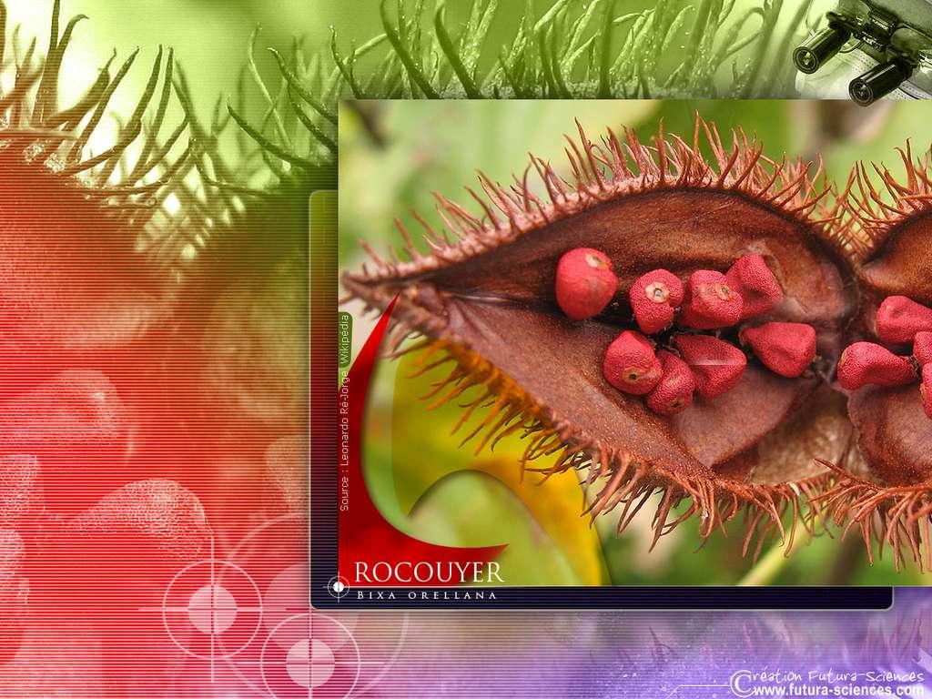 Rocouyer riche en vitamine A
