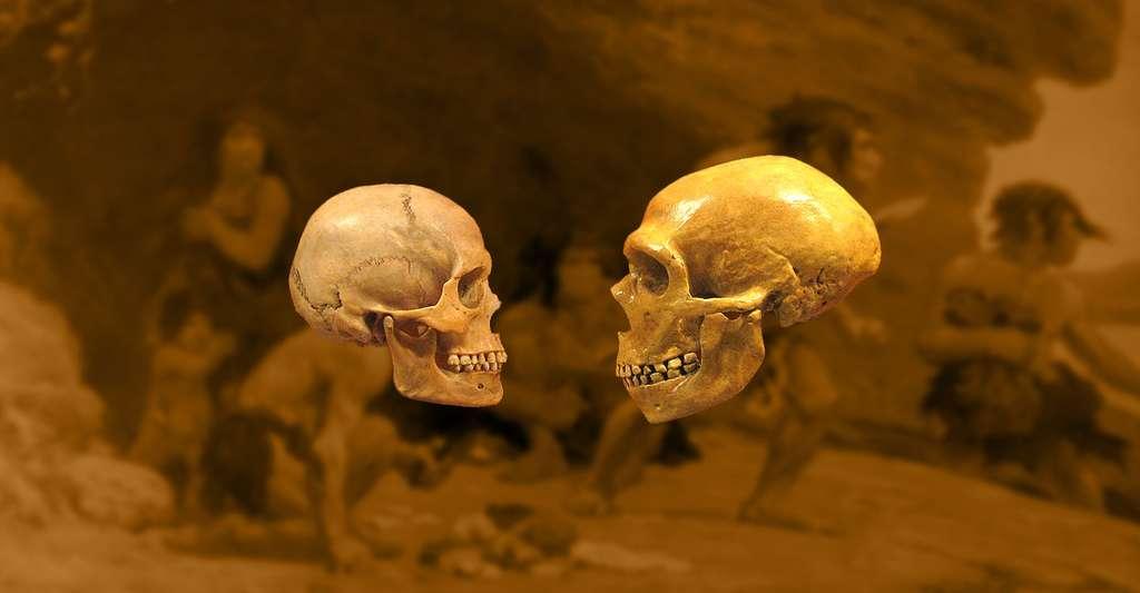 Comparaison d'un crâne d'Homme moderne et d'un Homme du Néandertal. © Dr Mike Baxter, Wikimedia commons, CC by-sa 2.0