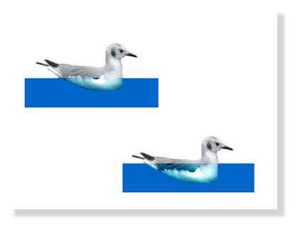 On perçoit ce qui se déroule lors d'une perte d'étanchéité, l'oiseau s'enfonce dans l'eau - littoral85.com ©2003