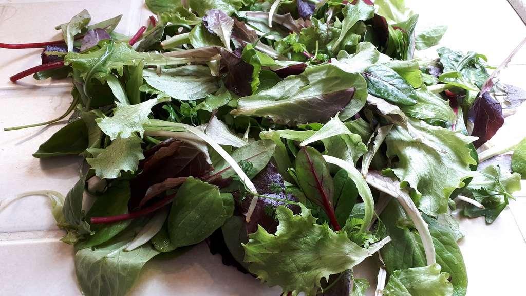 Feuilles de mesclun lavées et prêtes pour composer une salade. © S. Chaillot